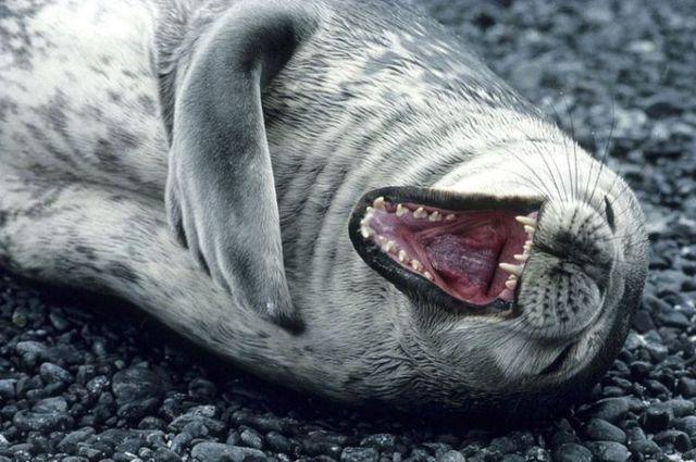Име:  rofl-seal-big.jpg Прегледи: 491 Размер:  58.9 Кб